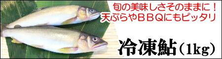 冷凍鮎(16尾)