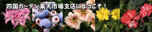 四国ガーデン楽天市場支店