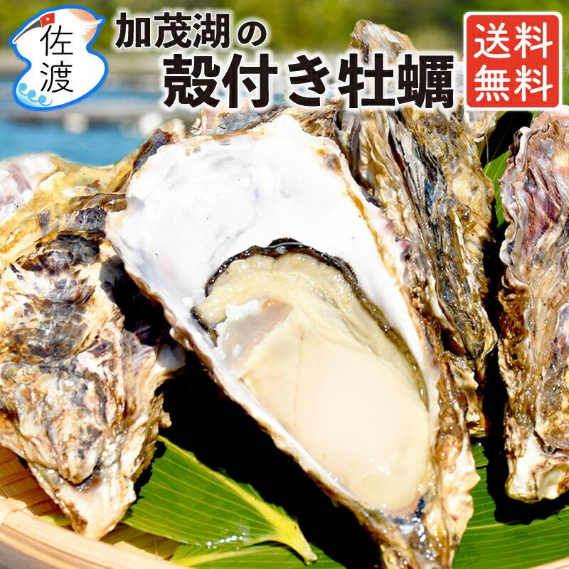 佐渡産 殻付き牡蠣