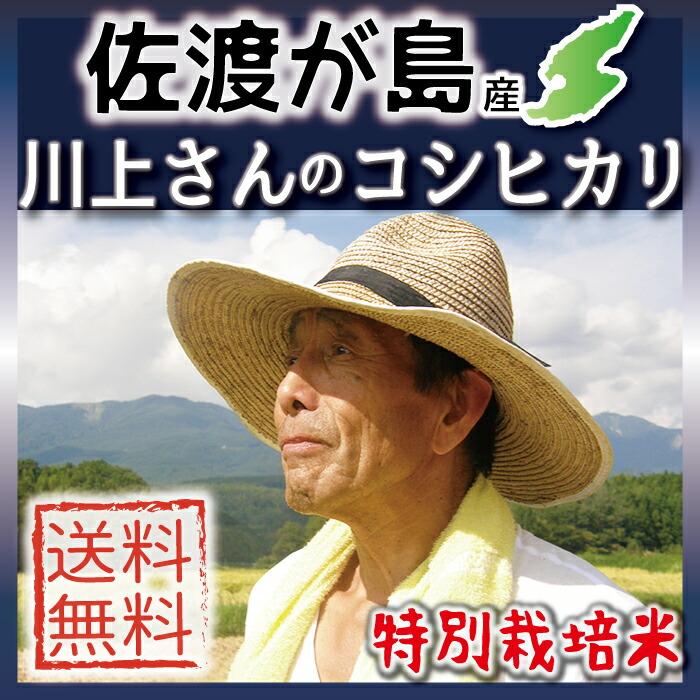 佐渡産コシヒカリ 川上さん