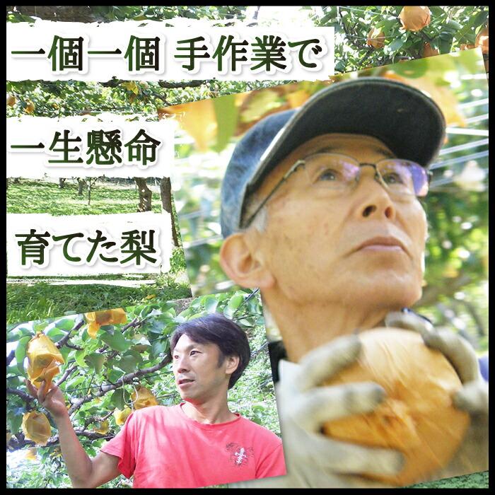 一個一個手作業で育てた梨