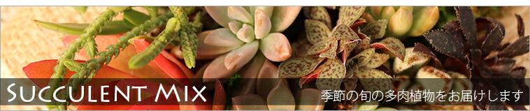 抜き苗20種類セット