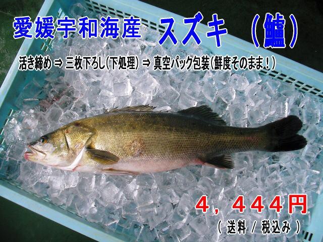愛媛宇和海産 『 スズキ (鱸) 』 真空パック 【送料無料】