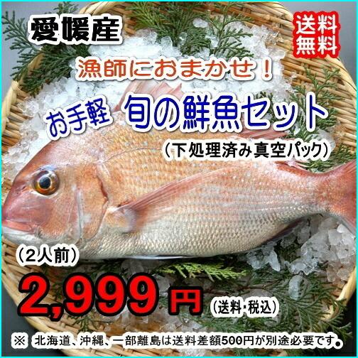愛媛産 『 漁師におまかせ!お手軽鮮魚セット (2人前) 』【送料無料】