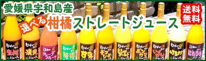 愛媛のみかんジュース 無添加 無加水 無加糖 100%ストレートジュース