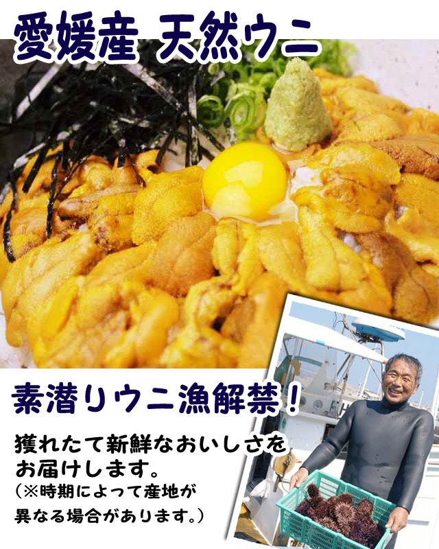 愛媛佐田岬産天然完熟岬紫ウニ【送料無料】