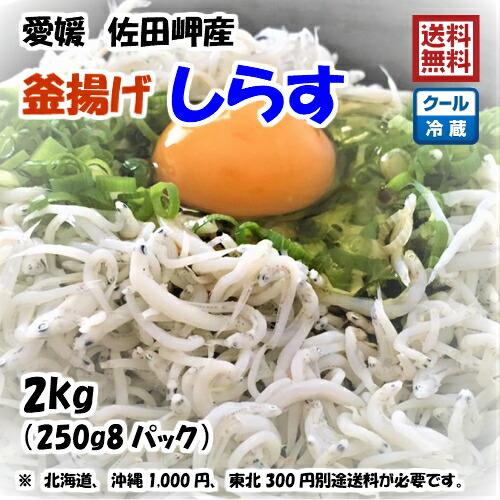 愛媛 佐田岬産 【 釜揚げしらす 】 2kg 宇和海の幸問屋 送料無料
