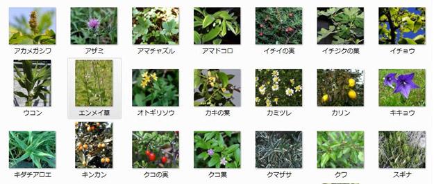 生酵素サプリの秘密!実は沢山の野草や果物をブレンドしています