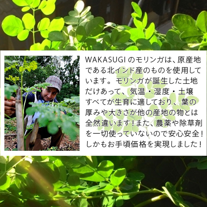 モリンガは「森のミルク」「奇跡の木」と呼ばれ、国際連合世界食糧計画に採用されました