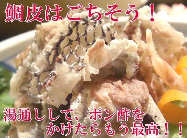 マダイ まだい 真鯛 タイ たい 鯛 真鯛