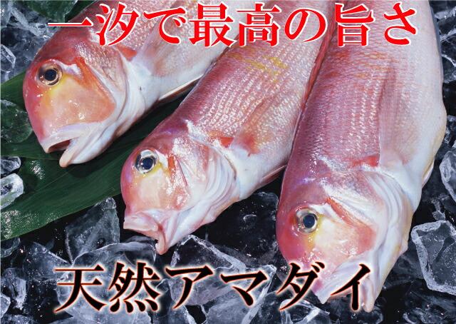 アマダイ 鮮魚