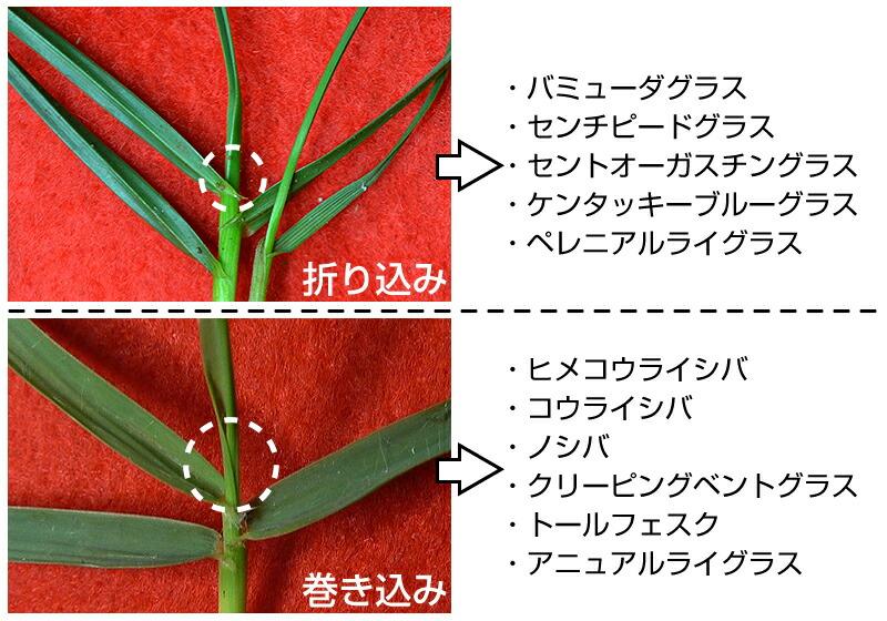 芽型・葉の配列