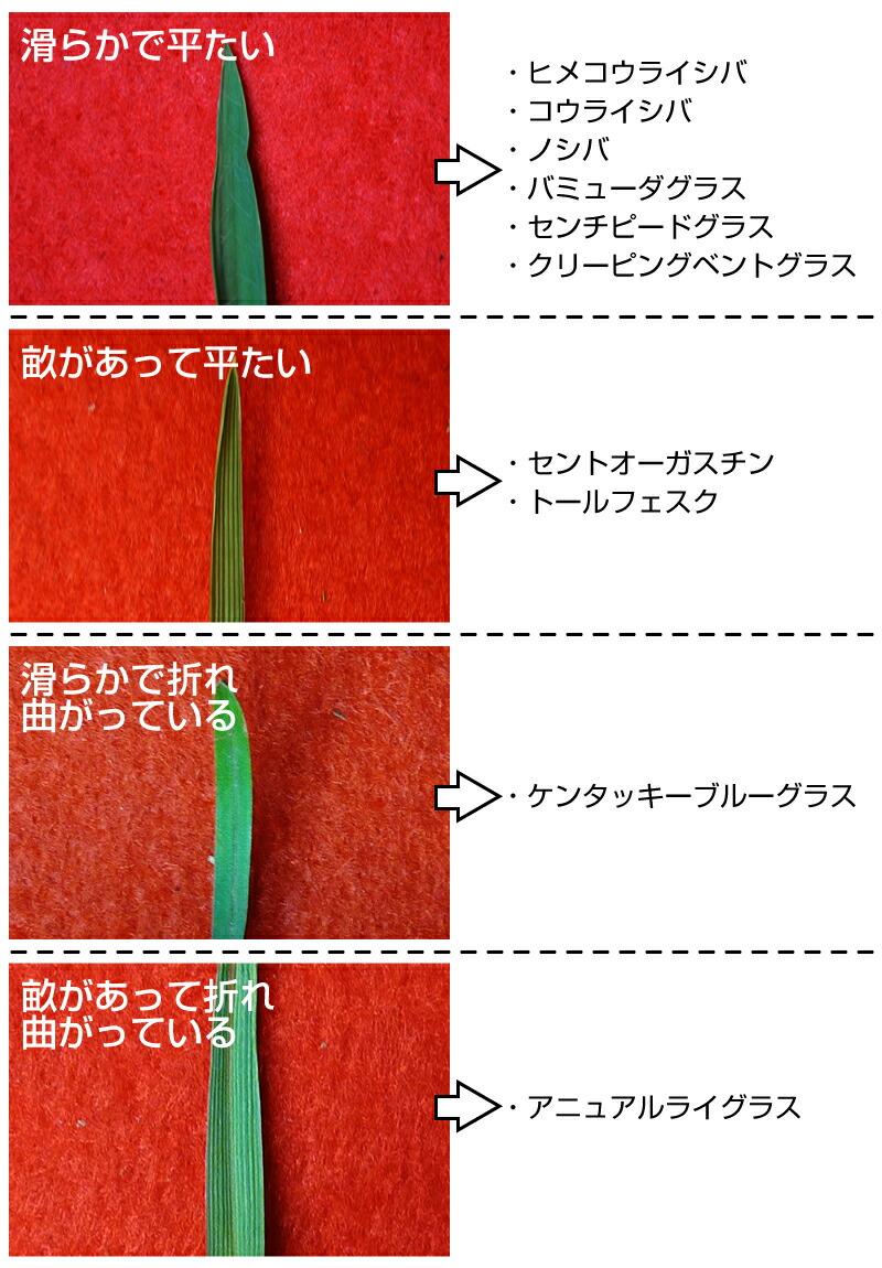 葉の表面の形状
