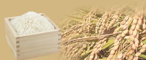 熊本製粉の米粉