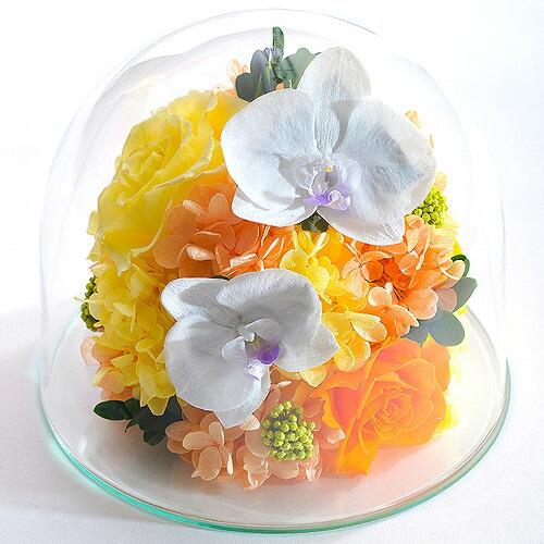 胡蝶蘭のガラスドーム2L