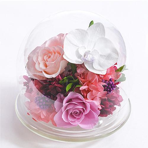 胡蝶蘭のガラスドームL