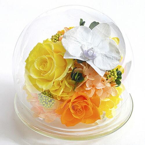 胡蝶蘭ガラスドームL