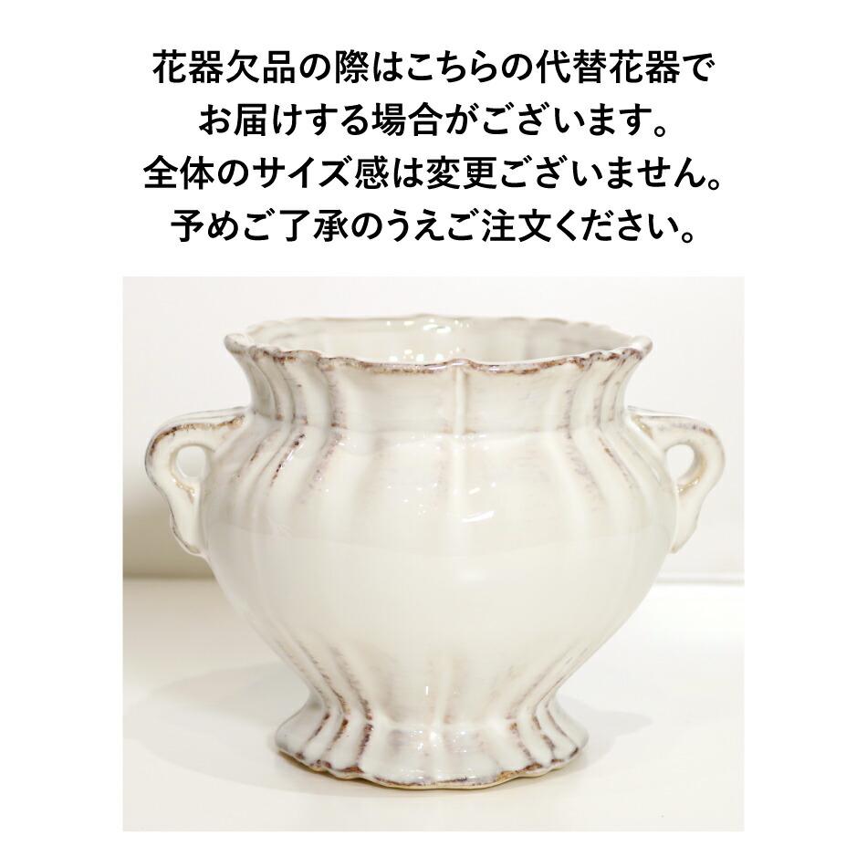 胡蝶蘭ローズブリリアント 代替花器の画像