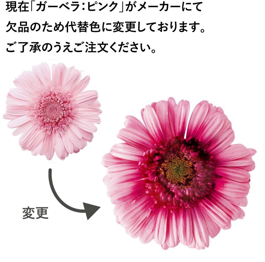 ミグノン ガーベラピンク 代替花材の画像