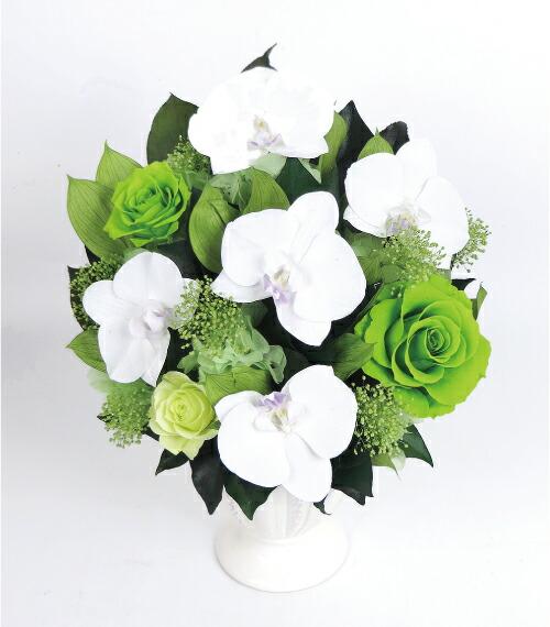 胡蝶蘭ローズブリリアント グリーンの画像