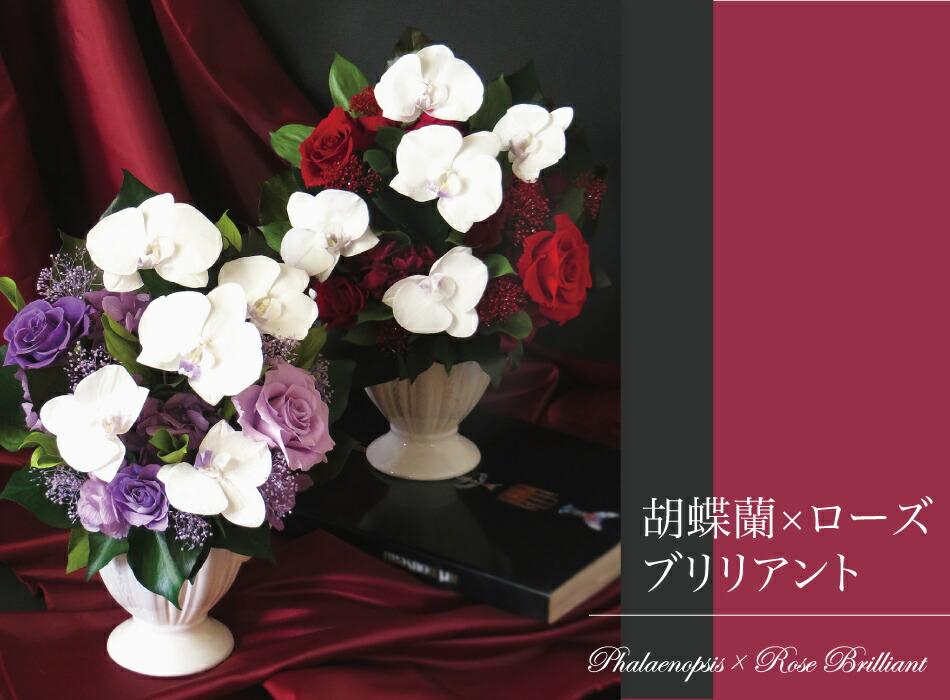 胡蝶蘭ローズブリリアント メイン画像