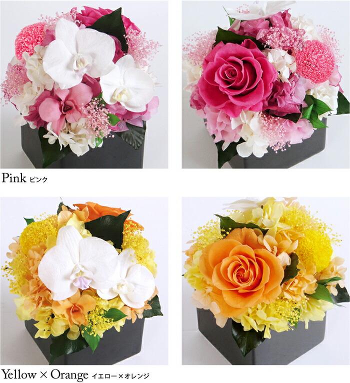 胡蝶蘭キューブM ピンクとイエローオレンジの画像