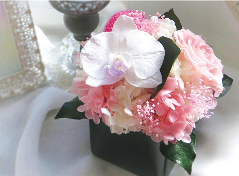 胡蝶蘭キューブS ピンクの画像