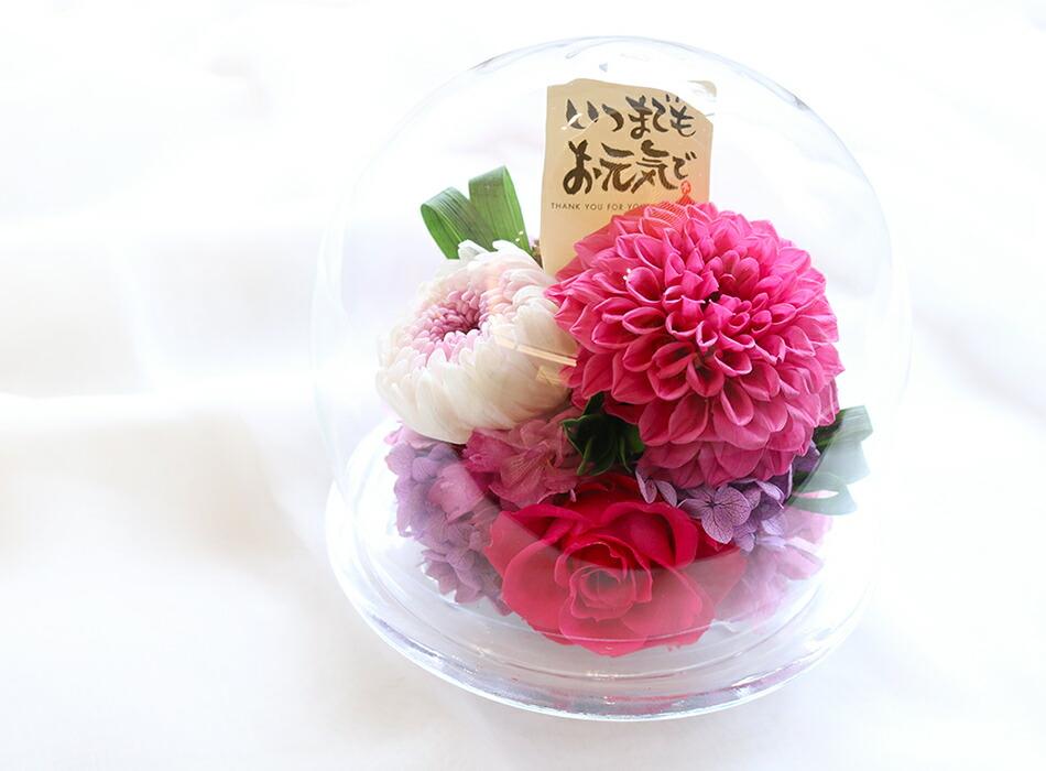 ダリアと輪菊のガラスドーム敬老の日・長寿祝い用ピック無料