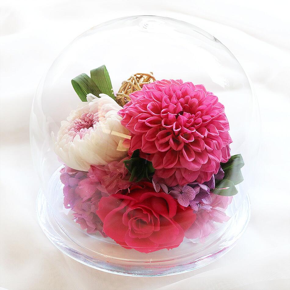 ダリアと輪菊のガラスドームピンク