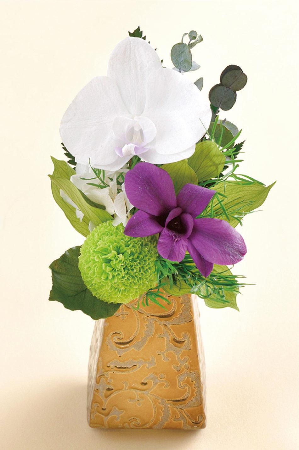 如月胡蝶蘭の画像