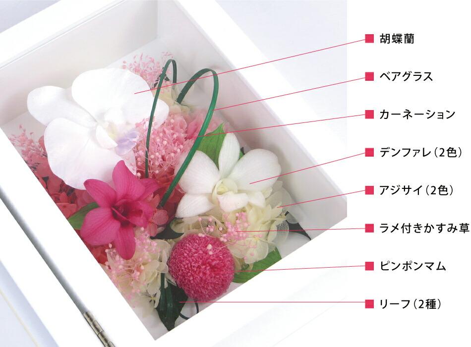 胡蝶蘭プリフォトL 花材詳細画像
