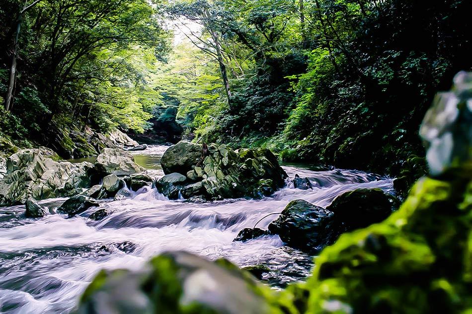 金北山からの天然水