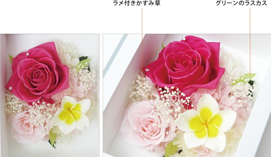 プルメリアプリフォトL ピンクのデザイン画像