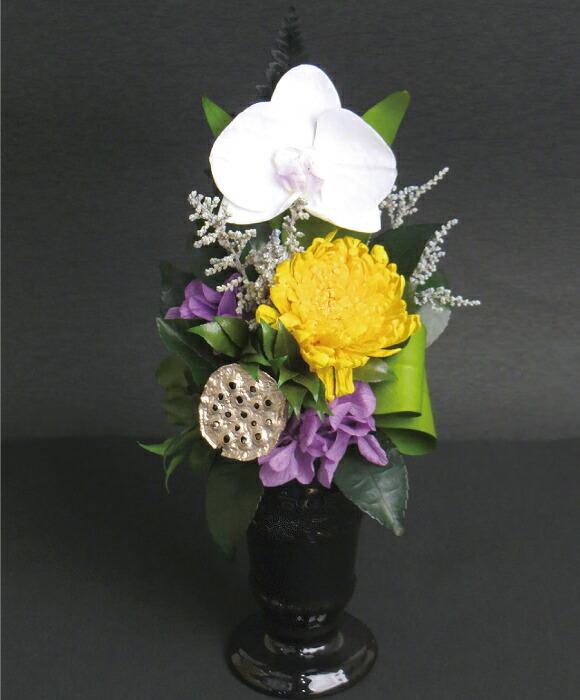 蓮華 胡蝶蘭の画像