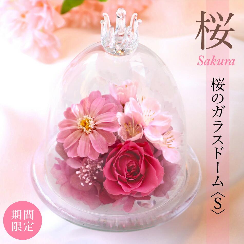 桜のガラスドームS メイン画像