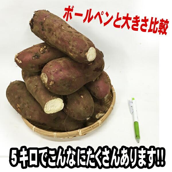 訳あり お得 家庭用 さつまいも サツマイモ 甘藷 甘薯
