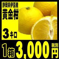 幻のミカン 黄金柑 ゴールデンオレンジゴールデンオレンジ