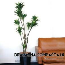 ドラセナコンパクタ 1.6 光触媒 イミテーショングリーン