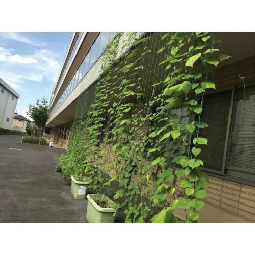 ダイオ化成DioChemicalsDioつるもの園芸ネット緑10cm角目幅0.9mX長さ1.8m