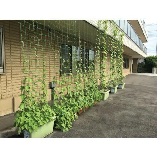 ダイオ化成DioChemicalsDioつるもの園芸ネット緑10cm角目幅1.8mX長さ3.6m
