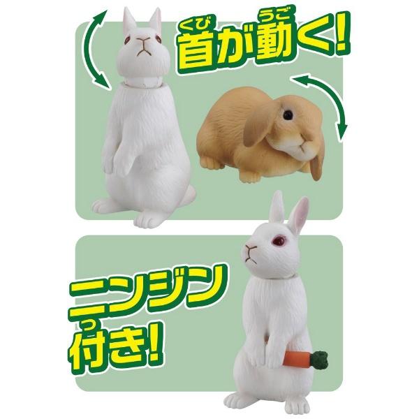 タカラトミーTAKARATOMYアニアAS-34ウサギ(日本白色種&ロップイヤー)