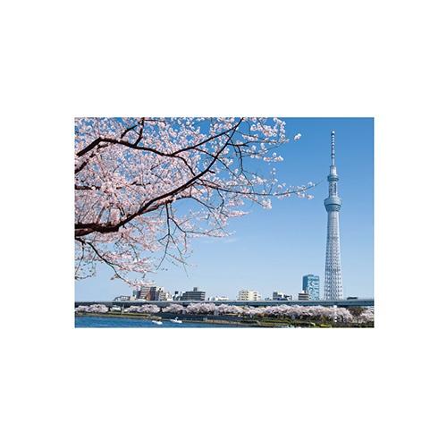 セキセイSEKISEIPKN-731パックンカバーノート高透明A5東京スカイツリー