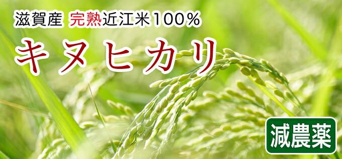 減農薬米キヌヒカリ