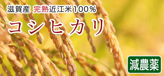 減農薬米コシヒカリ