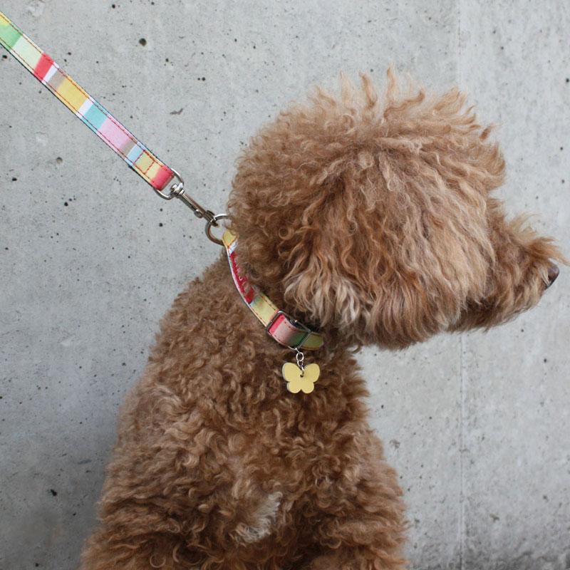 【小型犬用ワンタッチバックル首輪】マルチボーダーカラーSサイズ