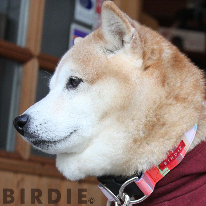【大型犬用ワンタッチバックル首輪】マルチボーダーカラーLサイズ