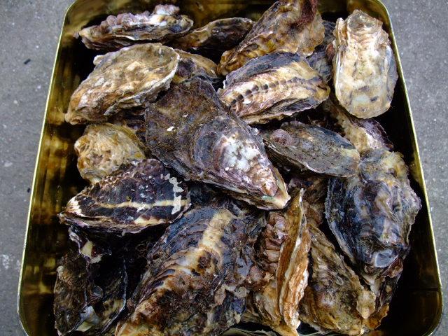 牡蠣/かき/殻付き牡蠣