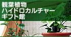 ハイドロカルチャー・観葉植物・花