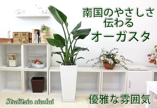 観葉植物を飾ってリラックス空間に!