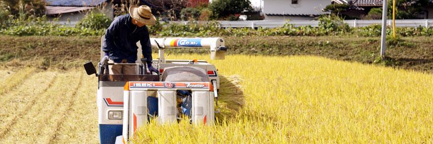 自然栽培米朝日